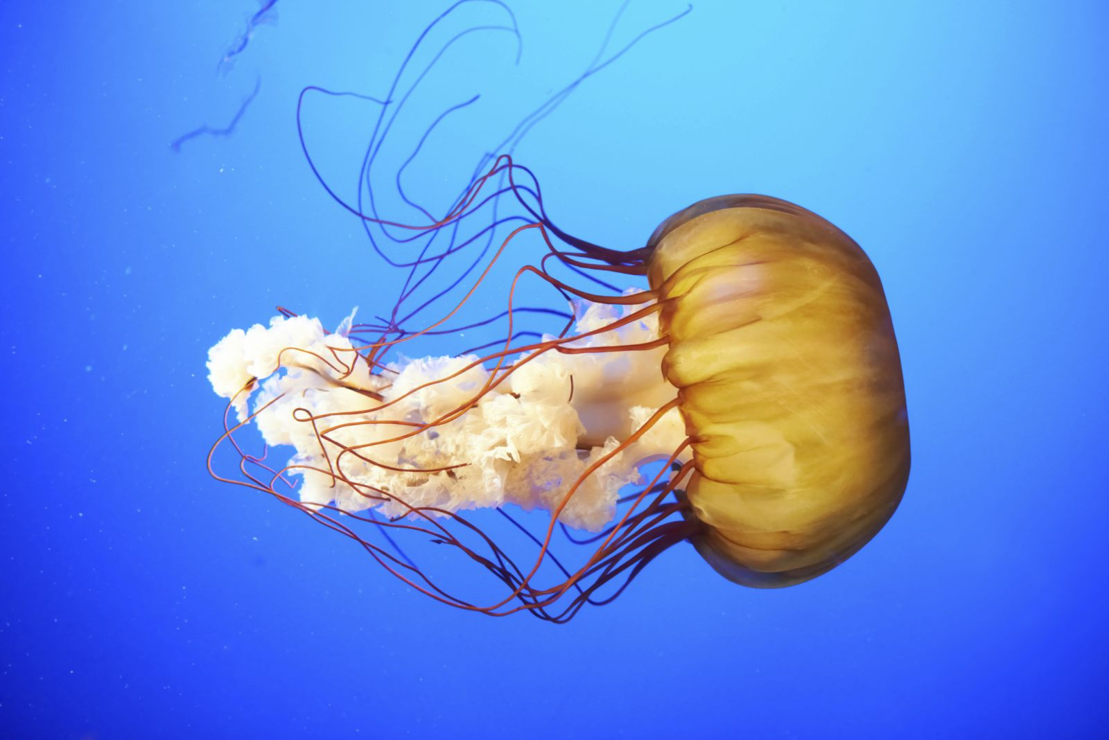 series Jellyfish